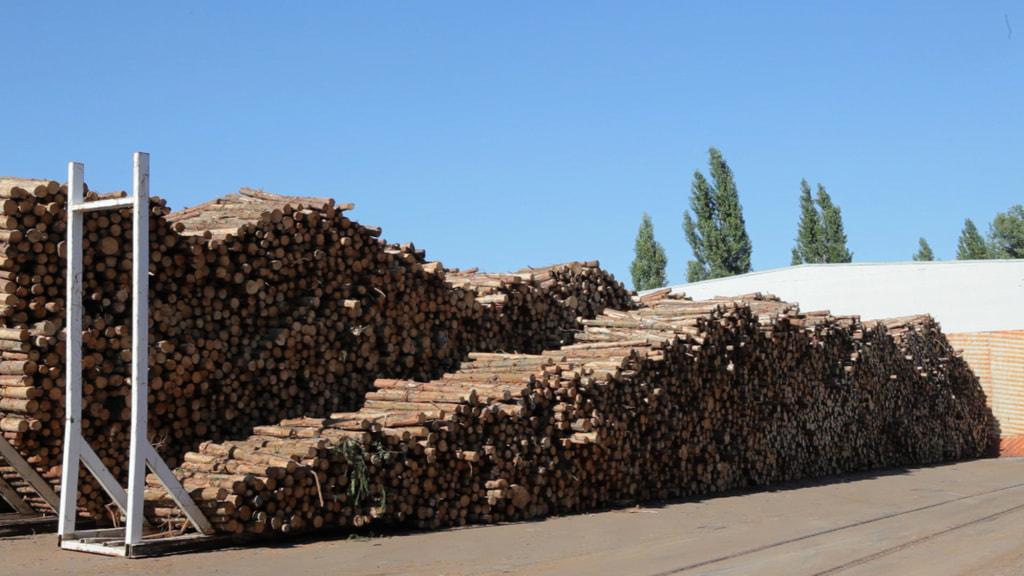 Holz ist Rohstoff für die Zellstoff- und Papierindustrie. Das dabei anfallende Lignin könnte künftig als Rohstoff für Elektrolyte dienen.